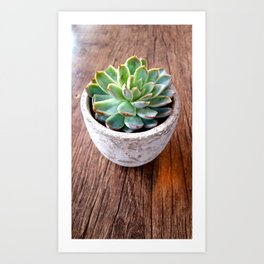 succulent in a pot Art Print