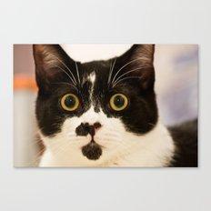 Pussy cat, pussy cat Canvas Print
