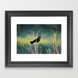 Clinging Redwing Framed Art Print