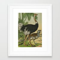 ostrich Framed Art Prints featuring Ostrich  by Connie Goldman