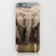 African Elephants iPhone 6 Slim Case