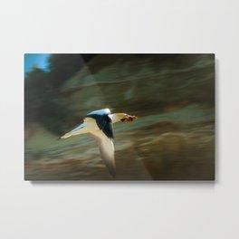 Flying Gannet Metal Print