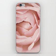 Pink Rose  iPhone & iPod Skin
