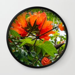 Stunning  flowers of African Tulip Tree at a beach in New Caledonia Wall Clock