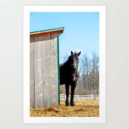 Percheron Horse by Teresa Thompson Art Print