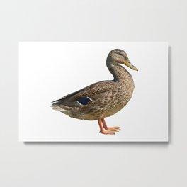 duck on rock at lake Metal Print