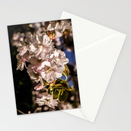 White Tree Blossom Stationery Cards