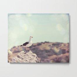 Seagull Bird Photography, Coastal California Coast, Beach Seashore Metal Print