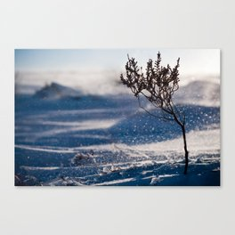 A little chilly. Canvas Print