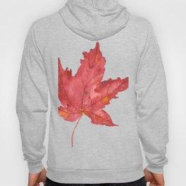 Fall Maple Leaf Hoody