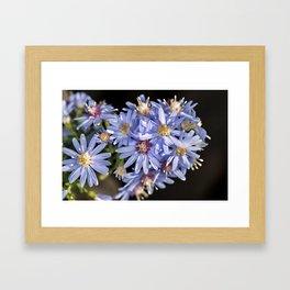 Blue wood aster flowers Framed Art Print