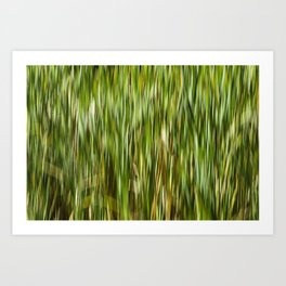 Abstracted Water Grasses in Jackson Park Art Print