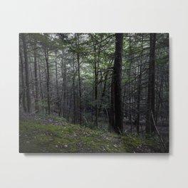 Poconos Forest Metal Print
