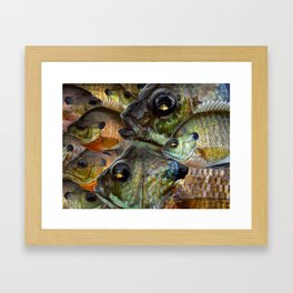 Bluegill Kaleidoscope 1 Framed Art Print