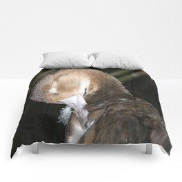 Preening Comforters