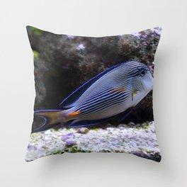 Sea World Colorful Fish Throw Pillow