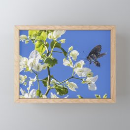 Pipevine Swallowtail Framed Mini Art Print
