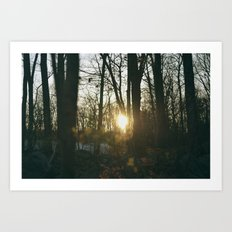 Sunset In The Woods Art Print