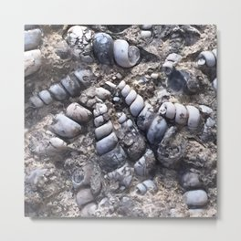 Nature - Fun Fossils Metal Print