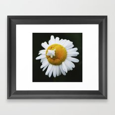 Matricaria Framed Art Print