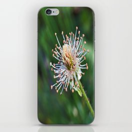Where's My Bloom(ers)??? iPhone Skin