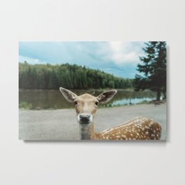 Fawn in nature looking in camera Metal Print