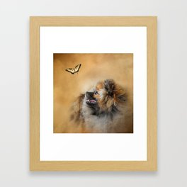 Butterfly Dreams - Pomeranian Framed Art Print