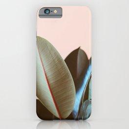 Ficus Elastica #1 iPhone Case