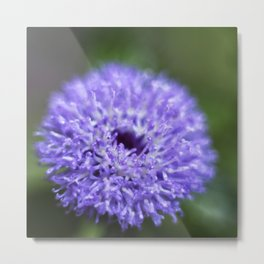 Brazilian Bachelor's Blue Button Flower Metal Print