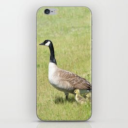 Canada Geese, Mother and Babies iPhone Skin