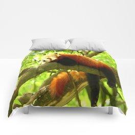 Chilling Red Panda Comforters