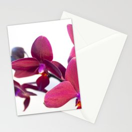Orchid Flowers 04 Stationery Cards