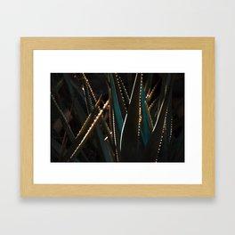 Golden Hour Cactus Framed Art Print