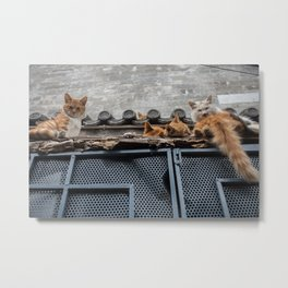 A Bunch of Cats Metal Print
