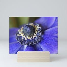 Blue Crown Anemone Mini Art Print