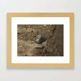 Woodland grey squirrel Framed Art Print