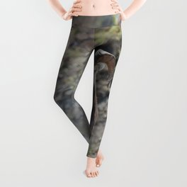 Wild Ram Photography Print Leggings