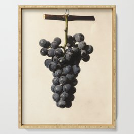 Vintage Concord Grapes Illustration Serving Tray