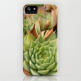 Hens and Chicks Plant iPhone Case