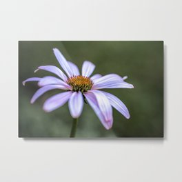 Echinacea flower up close Metal Print