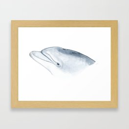 Bottlenose dolphin portrait Framed Art Print