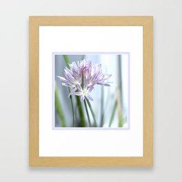 Flower   Flowers   Purple Chive   Kitchen Garden   Nadia Bonello Framed Art Print