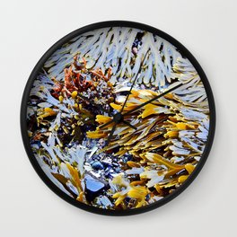 Sea Plants of the St-Lawrence Wall Clock