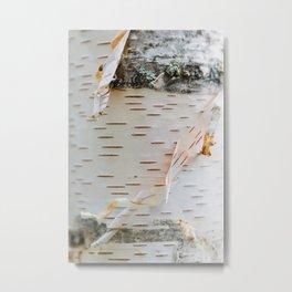 Paper Birch Metal Print