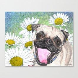 Daisy The Happy Pug Canvas Print