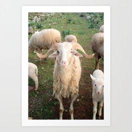 A Flock Of Sheep In A Rural Setting Art Print
