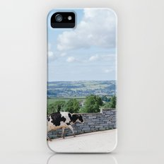Cow in Wales iPhone (5, 5s) Slim Case