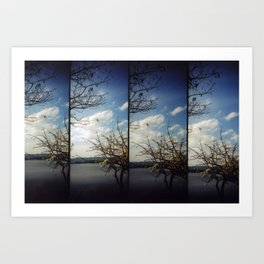 floating trees Art Print
