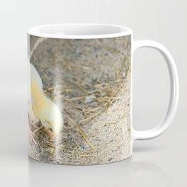Cute small chick walking on the sand and eating Coffee Mug