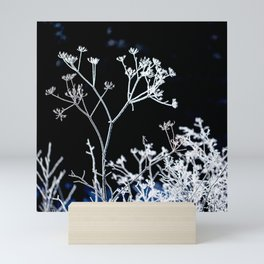 Frosted plant at cold winter day on black background Mini Art Print